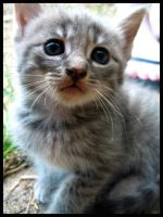 Cute kitten, meet camera. by xKxLxHx