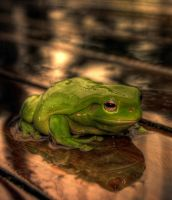 frog in the rain HDR by pantsonnos