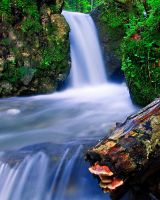 Forest waterfall by lica20