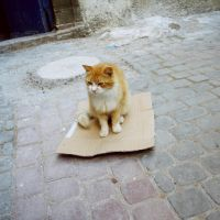 Cat on flying carpet by wavingmyarmsintheair