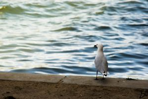 Another Seagull by donnybuy
