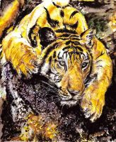 Tiger Watercolours by TheShums