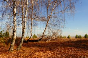 autumn forest5 by Tumana-stock