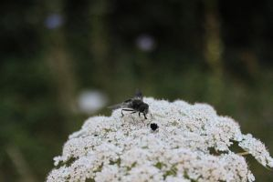 The Grey Mooded Bee by Scout2Freak