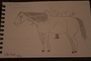 Buying PMU Mare B and W by OceanLore
