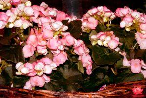 Flower Basket by MeKamalaPhotography