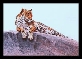 Leopard on Rock by CitizenOlek