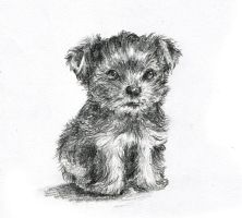 Terrier by ARRIAthelion