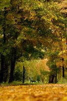 the picture of warmly autumn by anmaria
