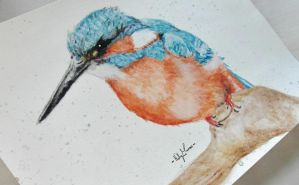 Kingfisher by Marmiexx