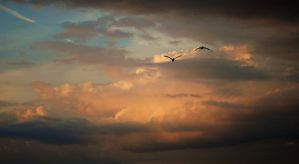 Pelicans by Bawwomick