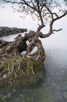 Gnarled by JamesHackland