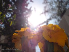 Under The Sun II by LenaDavid