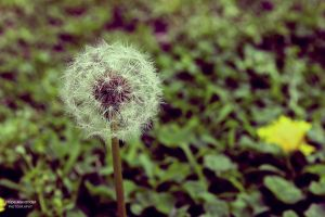 Make A Wish by plainandsimplephotos