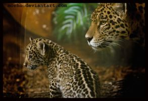 with mom ... by morho