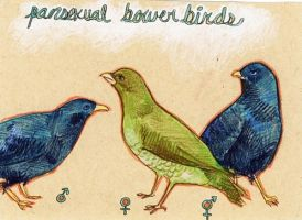 Pansexual Bowerbirds by 54