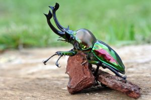beetle in natural light by macrojunkie