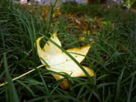 single leaf by SeafaringSarah