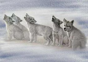 wolf pups by wolf-doggy