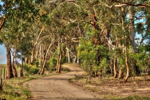 Anakie Road by DanielleMiner