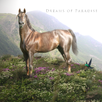 Dreams of Paradise by Barbaro411