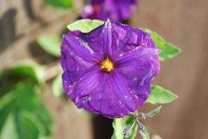 Purple Flower Stock a by IllusionsGlade