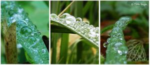 Oh raindrop, Oh raindrop... by MathildeHPhotography