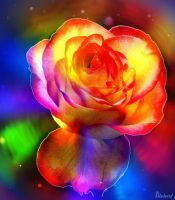 Multicolored rose soul. by Mladavid