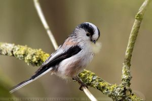 LTT by thrumyeye