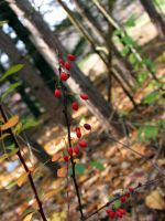 Fall Berries 1 by oldsoulmasquer