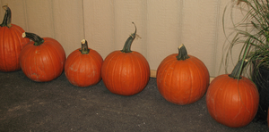 Pumpkins on the Floor by WDWParksGal-Stock