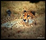 Relaxed and aware by TlCphotography730