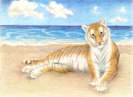 The Golden Tabby Tiger by grouchywolfpup