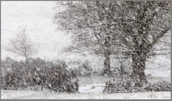 Snow Textures by sags