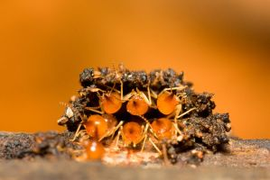 Termites by melvynyeo
