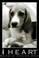 i HEART BEAGLE by shilohs