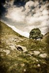Sycamore Gap 2 by newcastlemale
