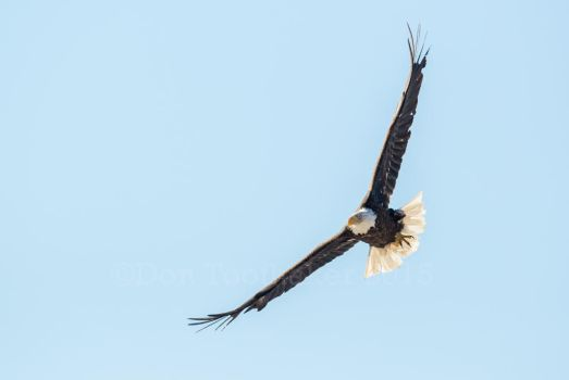 Soaring DT69051-1 by detphoto