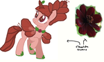 Chocolate Cosmos by Dinkypinky9