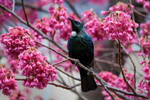 Tui by SnowWhiteInTheWood