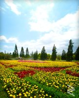 Another Flower Fields by venario