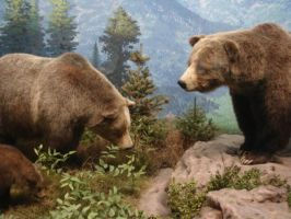 Highland Grizzly bears by DrachenVarg-stock