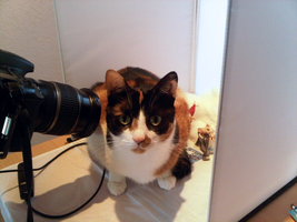 My cat is 'helping' me with this photo shoot.. by ShirleysStudio