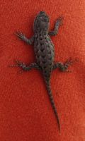 Lizard 2 -- Nov 2009 by pricecw-stock