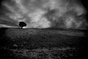 The Lonely Tree by Minko6