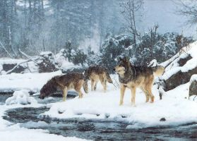 wolves in the snow by artiebic