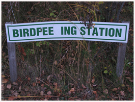Bird Peeing Station by caycowa