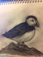 Charcoal Puffin sketch by Capri-of-the-North