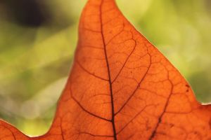 Leaves 2 by Tamamantix