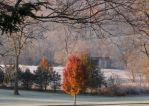 Kentucky 11/16 05 by acurmudgeon